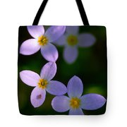 Bluets With Aphid Tote Bag