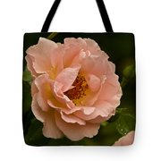 Blush Pink Rose With Dew Tote Bag