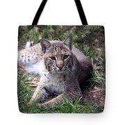 Bobcat 17 Tote Bag