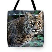 Bobcat Beauty Tote Bag