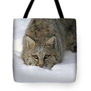 Bobcat Crouching In Snow Colorado Tote Bag