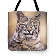 Bobcat Cub Portrait Montana Wildlife Tote Bag
