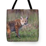 Bobcat Glance Tote Bag by Beth Sargent