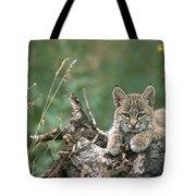Bobcat Kitten Resting On A Log Idaho Tote Bag