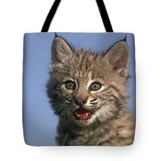 Bobcat Kitten Tote Bag