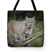 Bobcat On The Prowl Tote Bag
