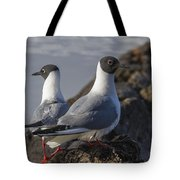 Bonaparts Gull's Tote Bag