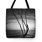 Bonita Beach Tree Black And White Tote Bag