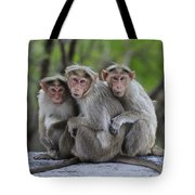 Bonnet Macaque Trio Huddling India Tote Bag