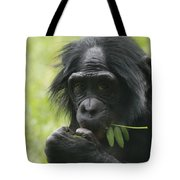 Bonobo Eating Tote Bag