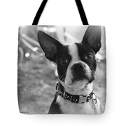Boomer Boston Terrier Tote Bag