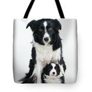 Border Collie Dog & Puppy Tote Bag