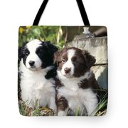 Border Collie Dog, Two Puppies Tote Bag