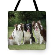Border Collie Dogs Tote Bag