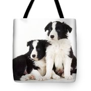 Border Collie Dogs, Two Puppies Tote Bag