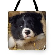 Border Collie Puppy And Wooden Wheel Tote Bag