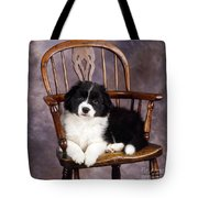 Border Collie Puppy On Chair Tote Bag