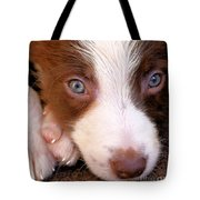 Border Collie Tan And White Pup Tote Bag