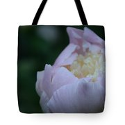 Bordering On Pink Tote Bag