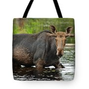 Boreal King Tote Bag