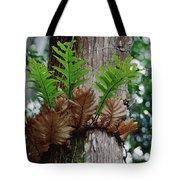Borneo Fern A Primitve Ant Plant Tote Bag