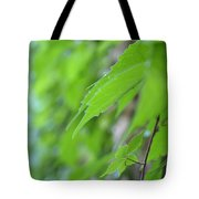 Boston Ivy Bokeh Tote Bag