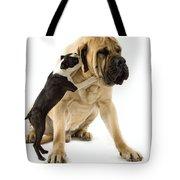 Boston Terrier And Mastiff Tote Bag