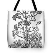 Botany: Giant Fennel, 1597 Tote Bag