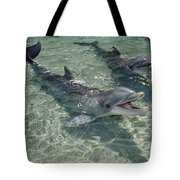 Bottlenose Dolphin In Shallow Lagoon Tote Bag