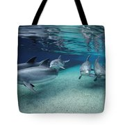 Bottlenose Dolphins In Shallow Water Tote Bag