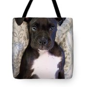Boxer Puppy Laying In Bed Tote Bag by Stephanie McDowell