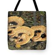 Bracket Fungi Tote Bag