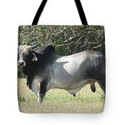 Brahama Bull Tote Bag