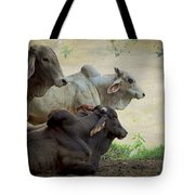 Brahman Cattle Tote Bag by Peggy Collins