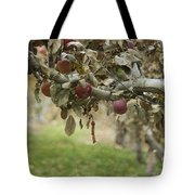Branch Of An Apple Tree Tote Bag by Juli Scalzi