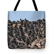 Brandts Cormorant Colony Tote Bag