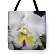 Brassocattleya Orchid 5292 Tote Bag