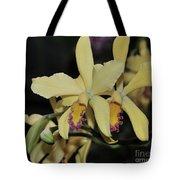 Brassolaeliocattleya Grodsky's Gold Tote Bag