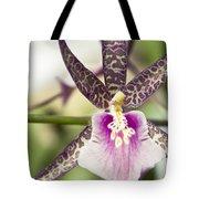 Bratonia Miltassia Charles M Fitch Izumi Orchid Hawaii  Tote Bag