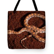 Brazilian Rainbow Boa Tote Bag
