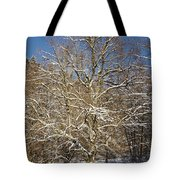 Break Under A Large Tree - Sunny Winter Day Tote Bag by Matthias Hauser