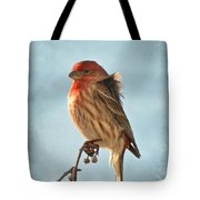 Breezy Morning Housefinch Tote Bag