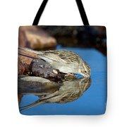 Brewers Sparrow At Waterhole Tote Bag