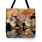 Brewers Sparrows At Waterhole Tote Bag