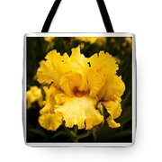 Bright Bright Spring Yellow Iris Flower Fine Art Photography Print  Tote Bag