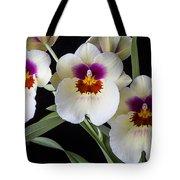 Bright Miltonia Orchids Tote Bag