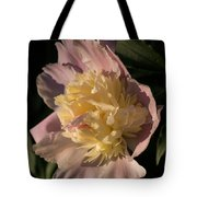Brilliant Spring Sunshine - A Showy Pink Peony From My Garden Tote Bag