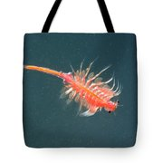 Brine Shrimp Tote Bag