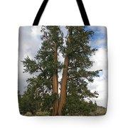 Brisslecone Pine Tree Tote Bag