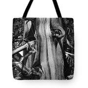 Bristle-cone Pine-2 Tote Bag